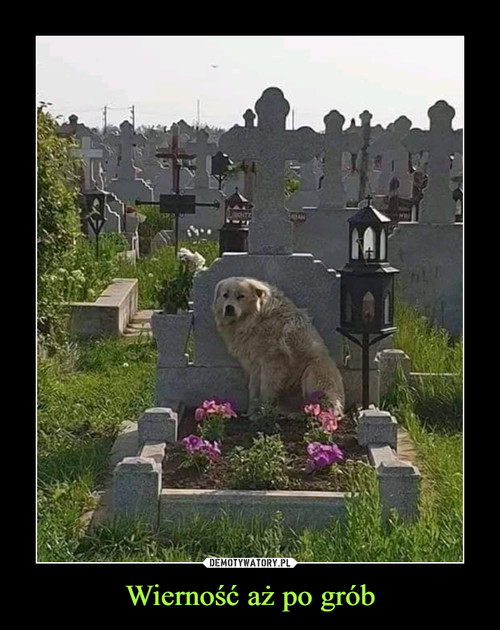 Wierność aż po grób