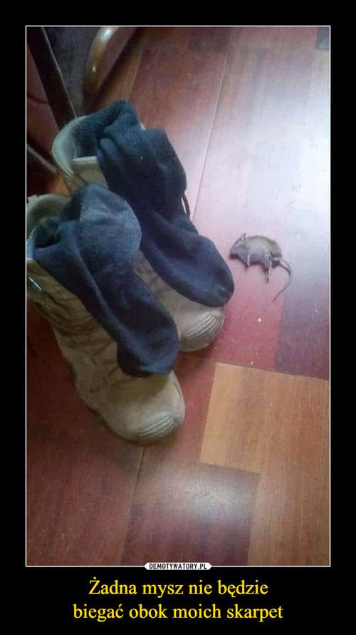 Żadna mysz nie będzie biegać obok moich skarpet