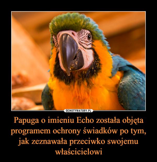 Papuga o imieniu Echo została objęta programem ochrony świadków po tym, jak zeznawała przeciwko swojemu właścicielowi –