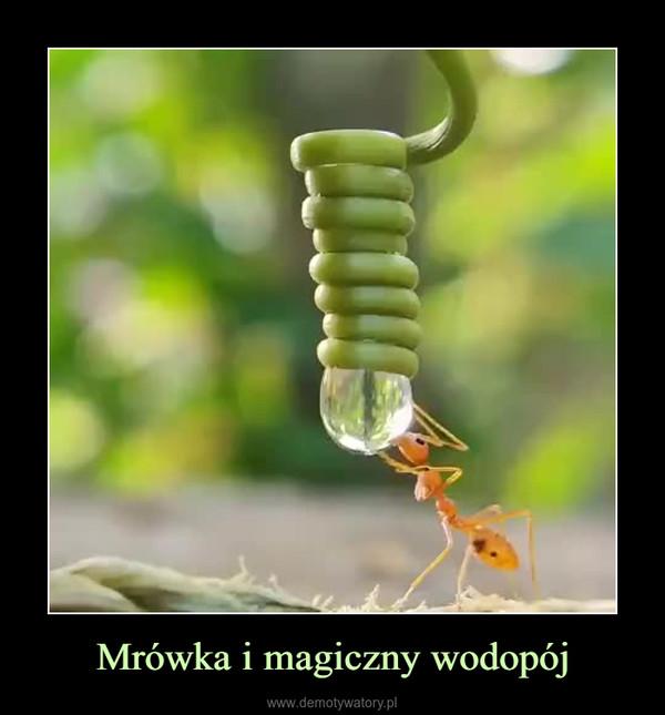 Mrówka i magiczny wodopój –