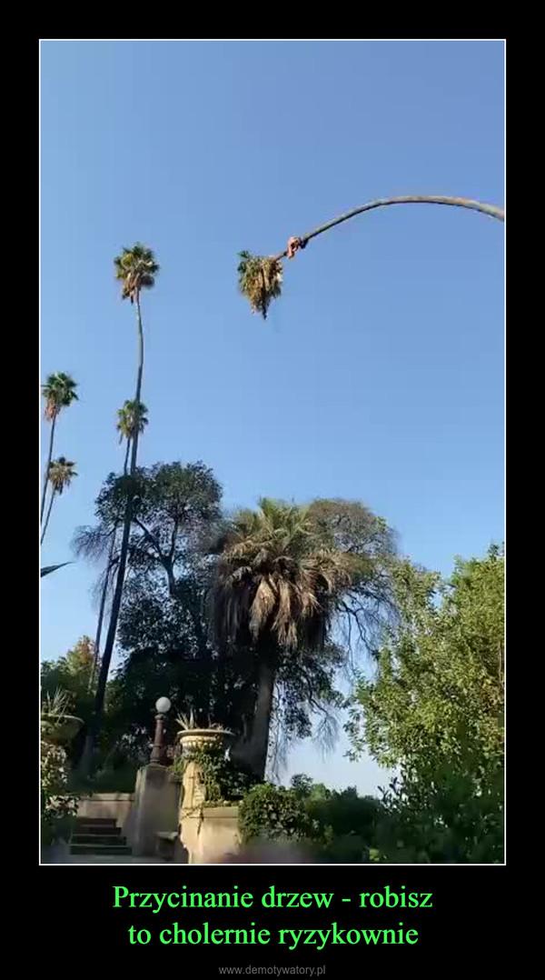 Przycinanie drzew - robiszto cholernie ryzykownie –