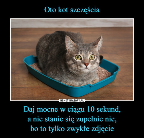 Oto kot szczęścia Daj mocne w ciągu 10 sekund, a nie stanie się zupełnie nic, bo to tylko zwykłe zdjęcie