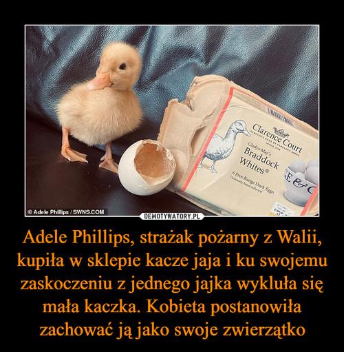 Adele Phillips, strażak pożarny z Walii, kupiła w sklepie kacze jaja i ku swojemu zaskoczeniu z jednego jajka wykluła się mała kaczka. Kobieta postanowiła zachować ją jako swoje zwierzątko