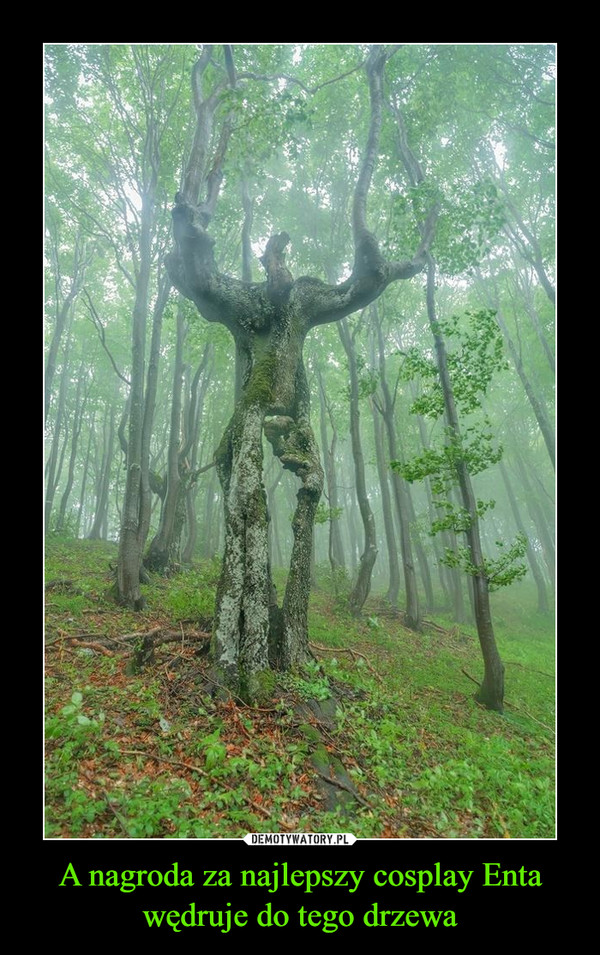 A nagroda za najlepszy cosplay Enta wędruje do tego drzewa –