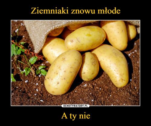 Ziemniaki znowu młode A ty nie
