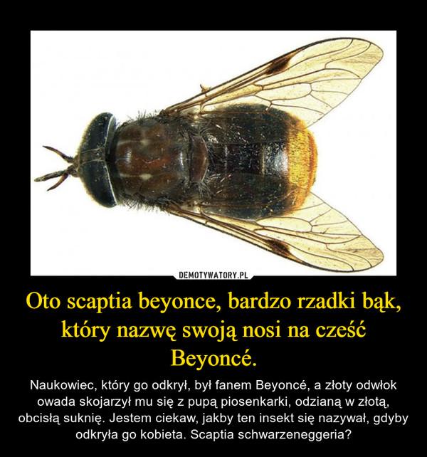 Oto scaptia beyonce, bardzo rzadki bąk, który nazwę swoją nosi na cześć Beyoncé. – Naukowiec, który go odkrył, był fanem Beyoncé, a złoty odwłok owada skojarzył mu się z pupą piosenkarki, odzianą w złotą, obcisłą suknię. Jestem ciekaw, jakby ten insekt się nazywał, gdyby odkryła go kobieta. Scaptia schwarzeneggeria?
