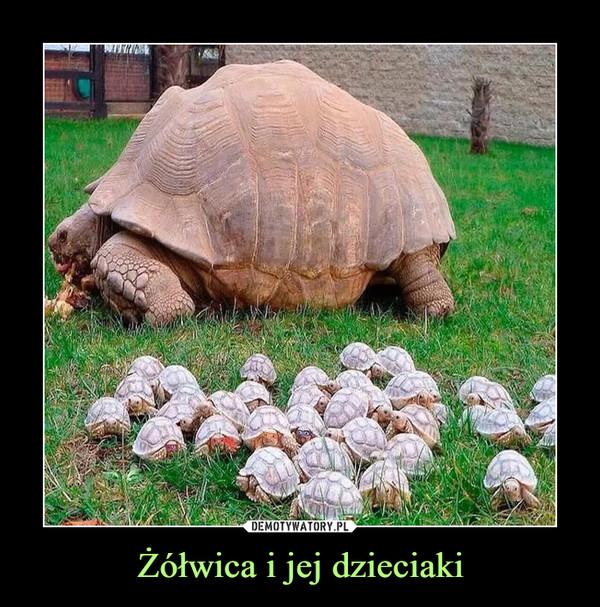 Żółwica i jej dzieciaki –