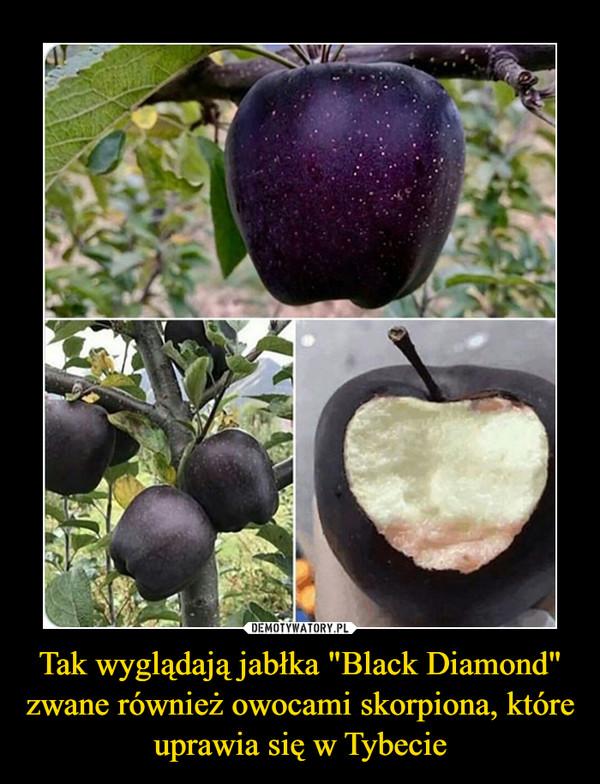 """Tak wyglądają jabłka """"Black Diamond"""" zwane również owocami skorpiona, które uprawia się w Tybecie –"""
