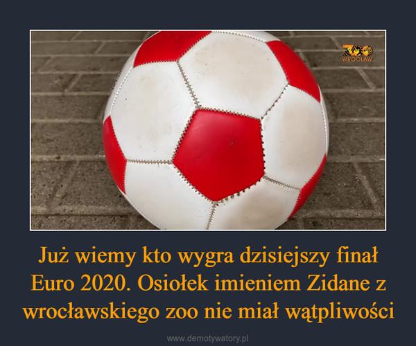Już wiemy kto wygra dzisiejszy finał Euro 2020. Osiołek imieniem Zidane z wrocławskiego zoo nie miał wątpliwości –