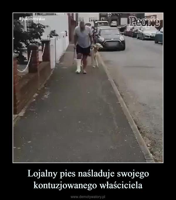 Lojalny pies naśladuje swojego kontuzjowanego właściciela –