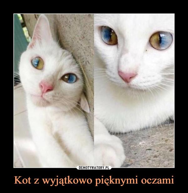 Kot z wyjątkowo pięknymi oczami –