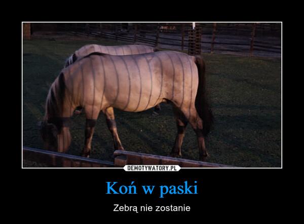 Koń w paski – Zebrą nie zostanie