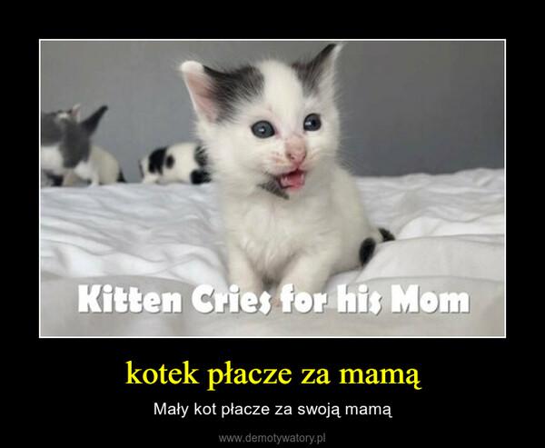 kotek płacze za mamą – Mały kot płacze za swoją mamą