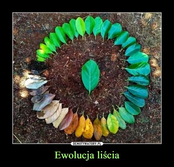 Ewolucja liścia –