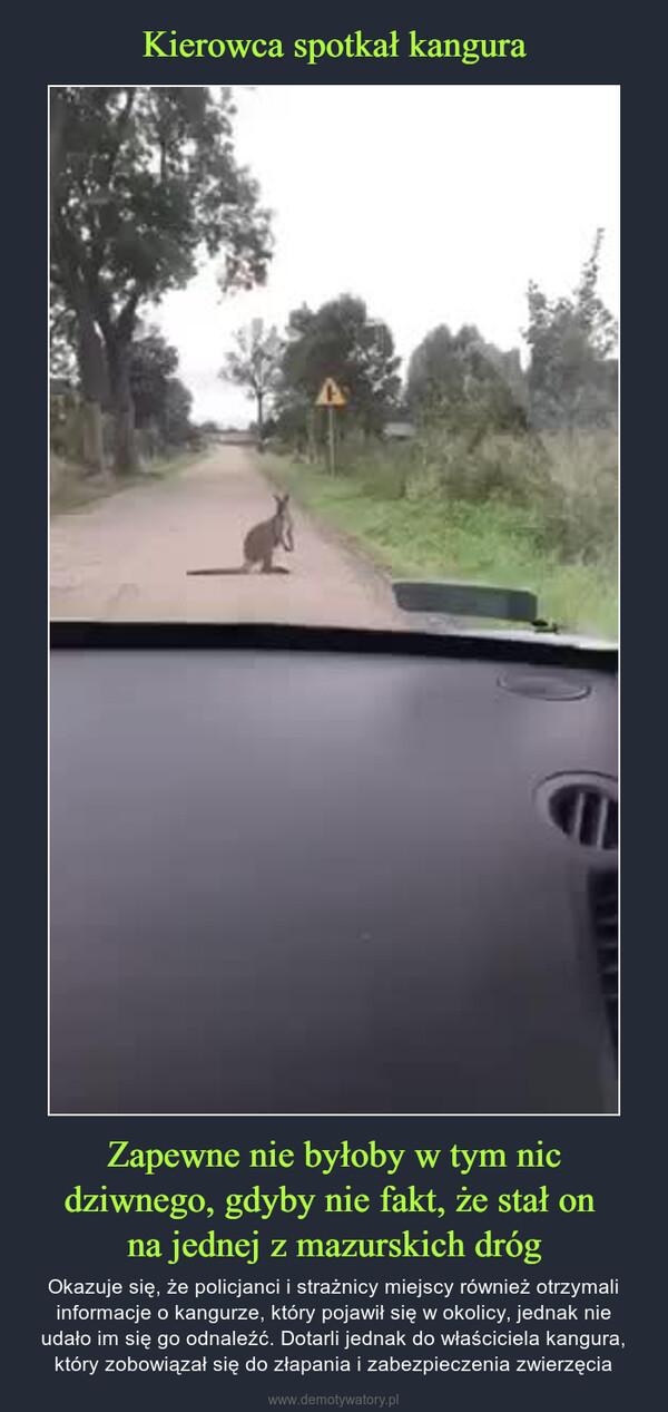 Zapewne nie byłoby w tym nic dziwnego, gdyby nie fakt, że stał on na jednej z mazurskich dróg – Okazuje się, że policjanci i strażnicy miejscy również otrzymali informacje o kangurze, który pojawił się w okolicy, jednak nie udało im się go odnaleźć. Dotarli jednak do właściciela kangura, który zobowiązał się do złapania i zabezpieczenia zwierzęcia