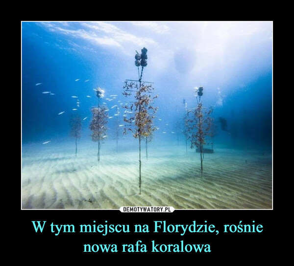 W tym miejscu na Florydzie, rośnie nowa rafa koralowa –
